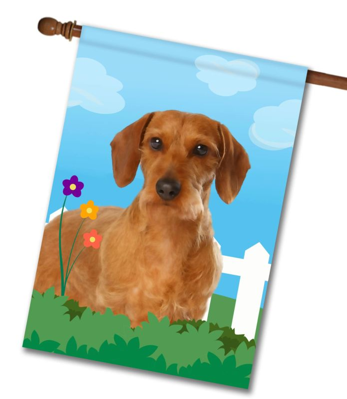 Spring Wirehaired Dachshund - House Flag - 28'' x 40''